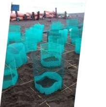 sea turtle nursery