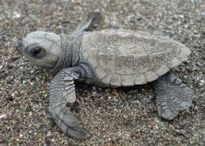 Sea Turtle Conservation & Environmental Education