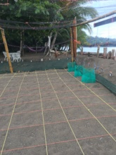 Sea Turtle Nursery.. Now we have 20 nests