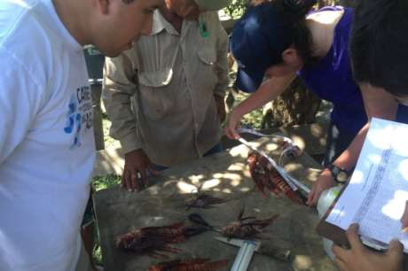 Control of Lionfish in the Mesoamerican Reef