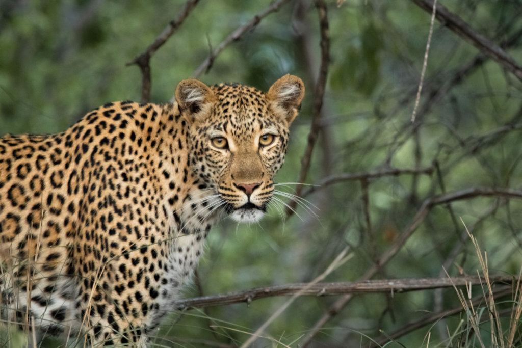 Save the Rainforest: Protect Jaguars and Wildlife
