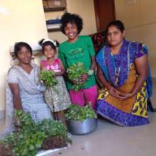 Leafy vegetable given to the home children