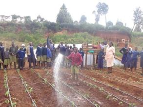 Rainwater harvesting for vegetable production