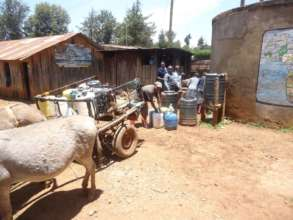 Drinking water from a well transported by donkeys