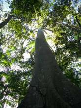 Forests stablilize the global climate
