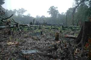 Amazon land deforested for agriculture