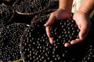Acai berries - a valuable forest product