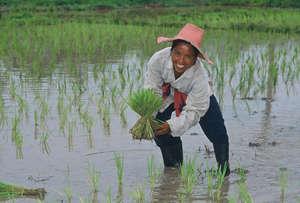 Woman in Marsh
