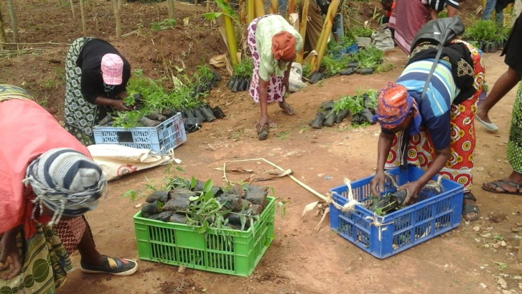 Forestry Training & Finance for 800 Farms in Kenya