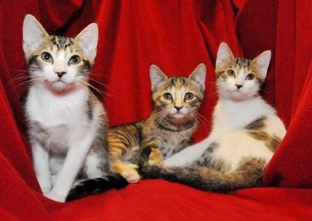Rescue cats from being euthanized at local shelter