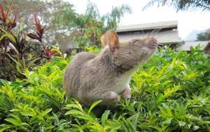 26 HeroRATs sent to Mozambique for mine detection