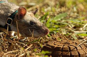 Mine detection HeroRAT