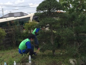 Pruning trees at senior resident`s home