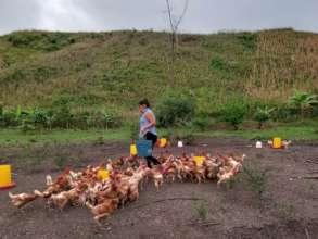 AO mentor feeding the chickens in Casa Productiva