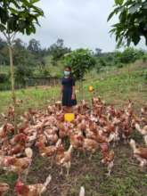 Mentor in charge of poultry quality oversight