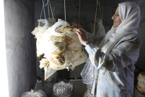 Entrepreneur, Ghada, shows off her mushrooms