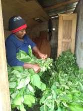 Chamba preparing her vegetables for the market