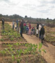 A Flourishing Nutritional Garden