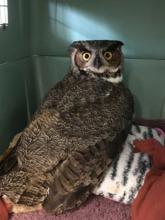 Eric's owl