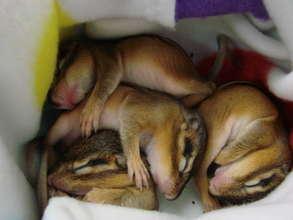 Family of orphaned chipmunks