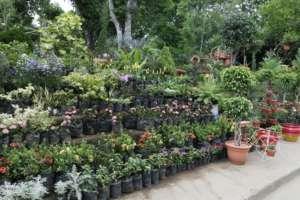 Beautiful gardens in San Juan de Oriente
