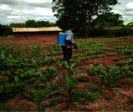 Dominic controlling armyworms with Lamder and Gola