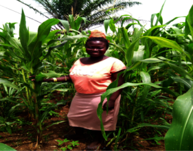 Gifty's maize survives fall armyworm attack