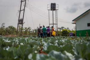 Agriculture and Entrepreneurship Training Center
