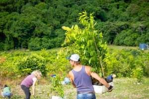 Community Tree Planting May 2017