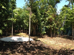 Cassowary enclosure for when the chicks have grown