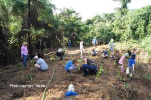 Volunteers reforesting Cassowary Habitat