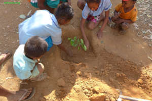 School chidren planting a tree in mango forest