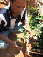 Growing seedlings in Fiadanana