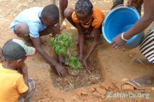 Reforestation in the school yard in Madagascar