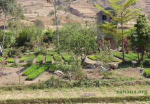 Professional tree nursery along the roadside