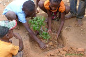 Planting the lychee tree seedling in school yard
