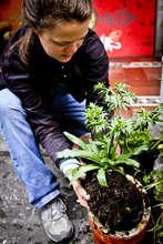 Sustainable Agriculture Intern Jenn Summers
