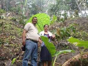 On this steep slope, agroforestry prevents erosion
