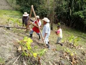 Establishing a new agroforestry parcel