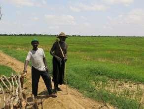 Rice field 2013