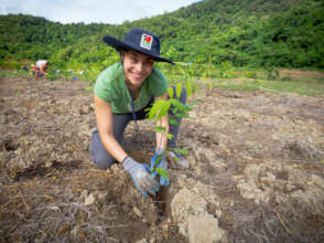 Rainforest Rescue regenerating work