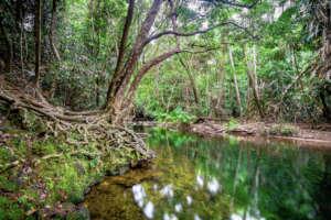 Daintree Rainforest (Martin Stringer Photography)