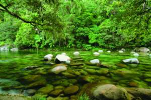 Pristine runoff into Daintree creek systems