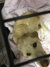 Little Roe just after being rescued