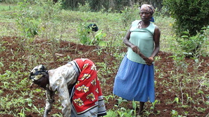 Some of the Women Tilling Land