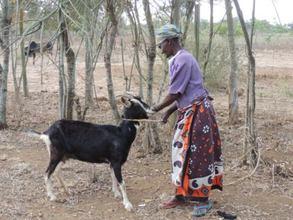 Dairy goat input