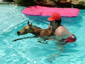 Spirit gets a dip in the pool with her therapist