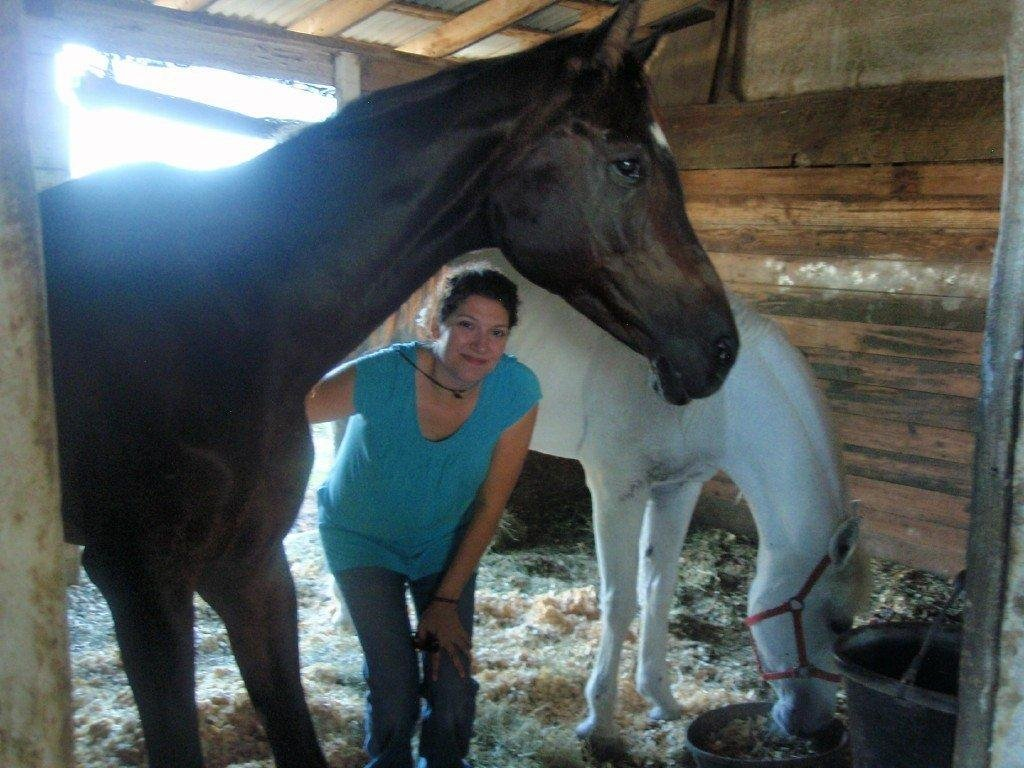TX rescued horses in need of medical assistance