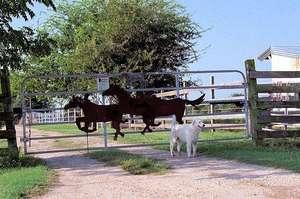 Spirit Acres Farm