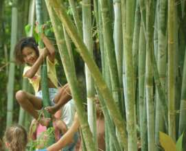 playing in the bamboo forest